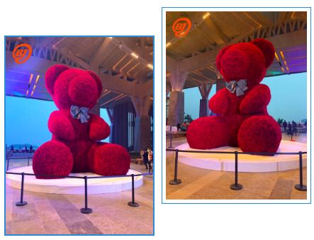 """吉尼斯世界纪录!百界打造世上""""最大的玫瑰熊""""  第2张"""