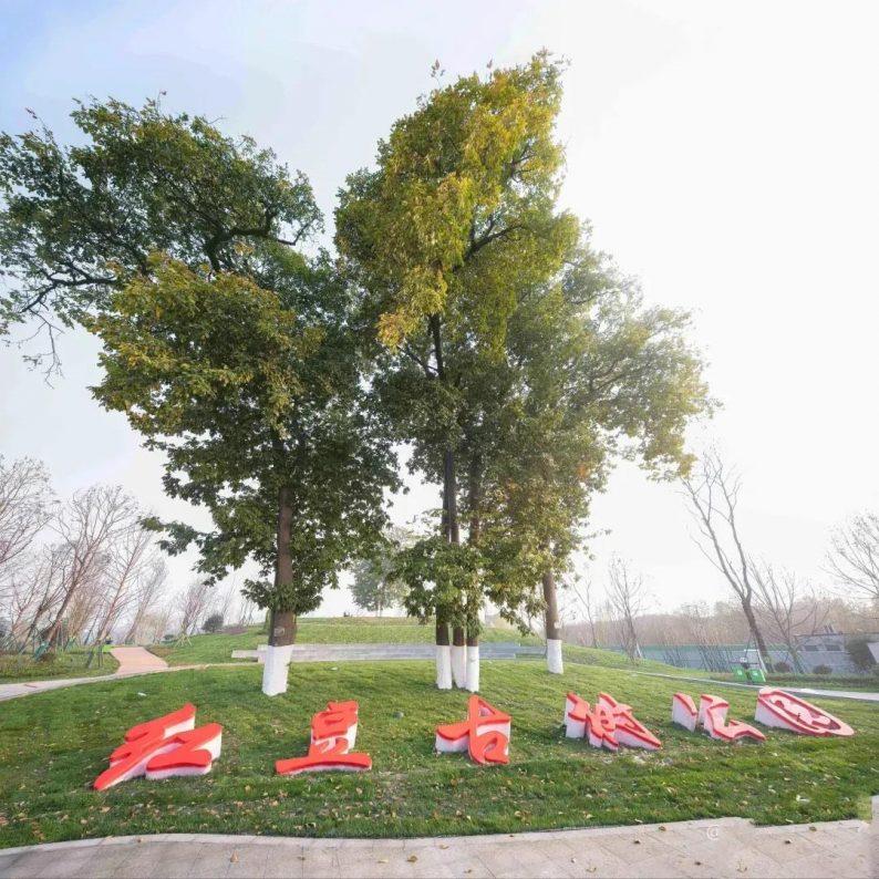 深化打造爱情主题,成都首个市级古树公园来了!  第2张