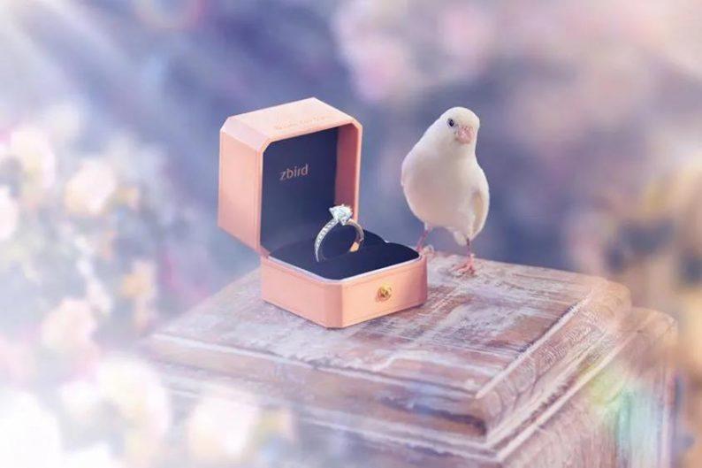 钻石小鸟郭海峰:「钻戒大师」如何用科技革新钻石零售市场?